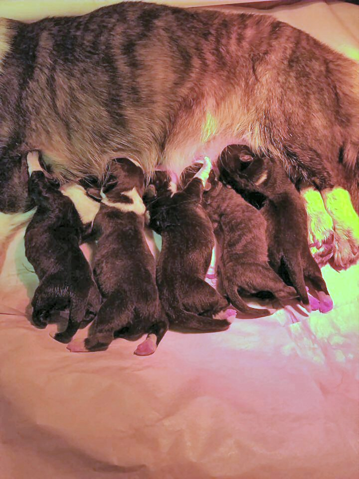 Allie whelped puppies Sat., December 29, 2018